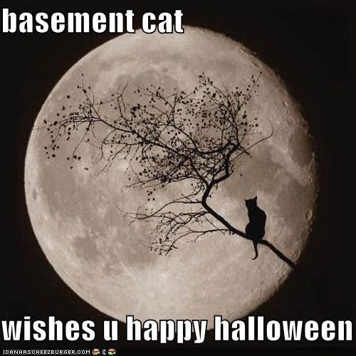 basement-cat-halloween.jpg