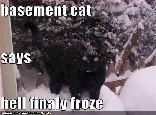 basement-cat-is-very-cold.jpg