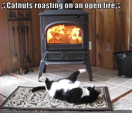 catnuts-roasting.jpg