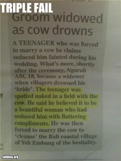 cow-drown-fail.jpg