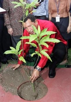 Hugo planting...oops!
