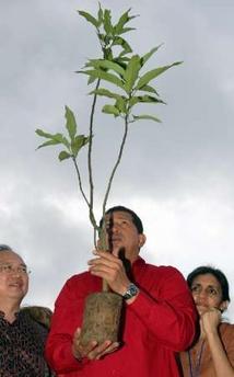 Hugo Chavez, green-thumb god