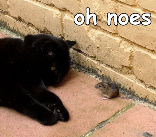 oh-noes-mouse.jpg