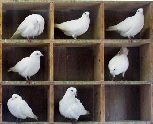 Pigeons in pigeonholes