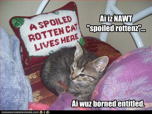 spoiled-rotten-kitty.jpg