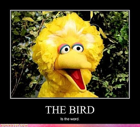 big-bird-is-the-word.jpg