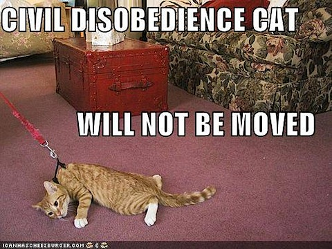 civil-disobedience-cat.jpg