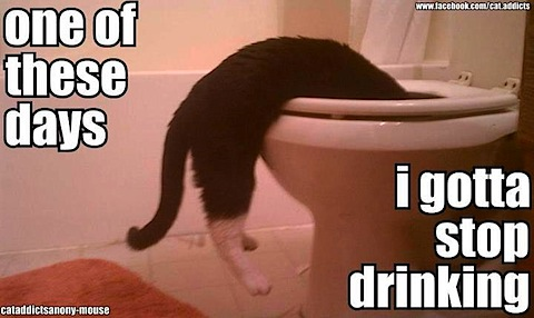 gotta-stop-drinking.jpg