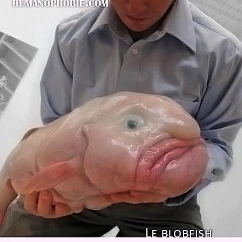 le-blobfish.jpg