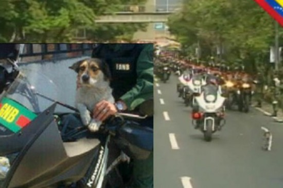 motorcycle-dog