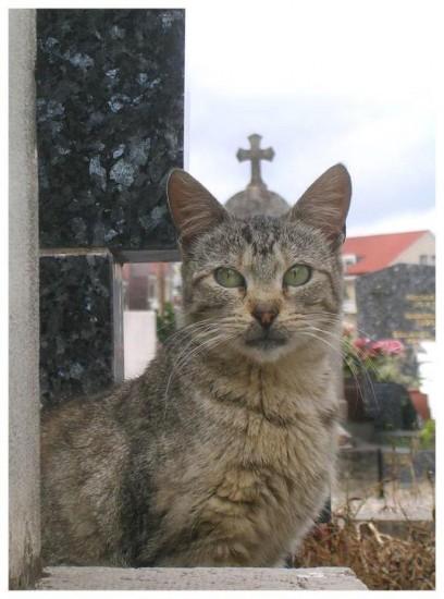 pope-kitty
