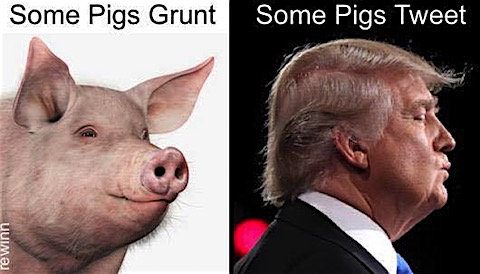 some-pigs.jpg