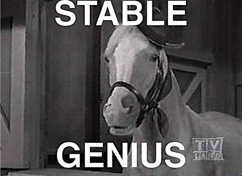 stable-genius.jpg