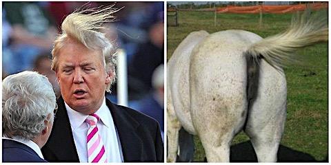 trump-horse-ass.jpg