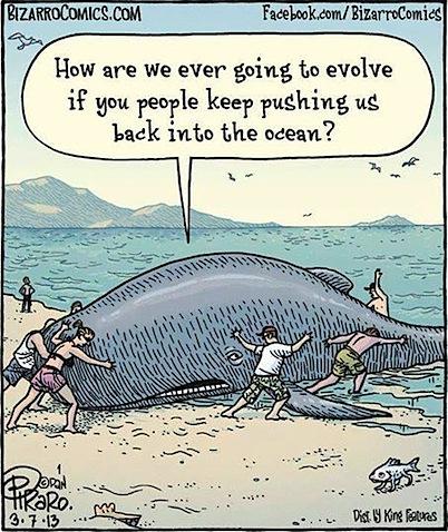 whale-evolving.jpg